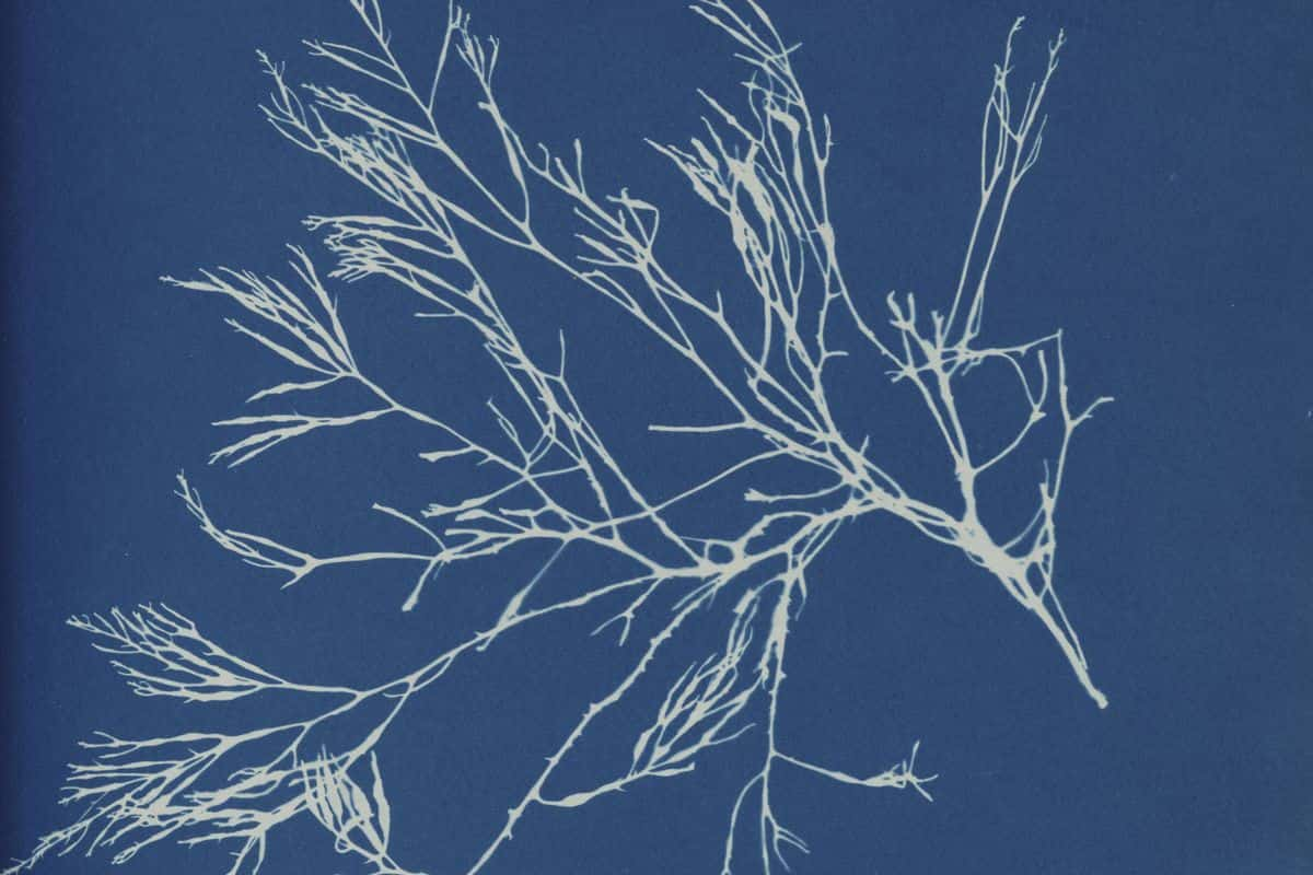Blue Prints: The Pioneering Photographs of Anna Atkins